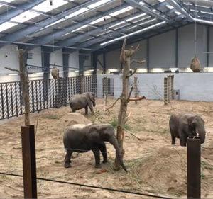 6 ledhejseporte til 4 elefanter